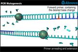 AbVideo™-PCR Mutagenesis-Abnova