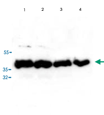 qc_test-KA0889-1.jpg